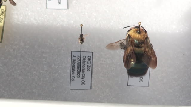 kfor oklahoma city ok us closeup of preserved insects collection on display at oklahoma city zoo on friday july 3 2020 - large group of animals stock videos & royalty-free footage