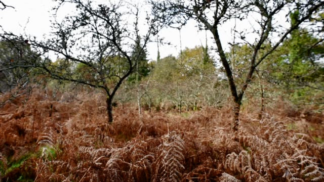 old apple orchard and bracken - bracken stock videos and b-roll footage