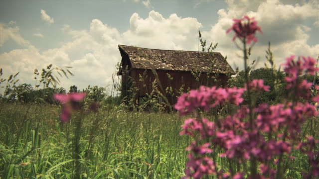 ws old barn with grass and flowers in foreground, iowa, usa - wildblume stock-videos und b-roll-filmmaterial