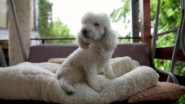 White Furry Rug Stock Videos Royalty
