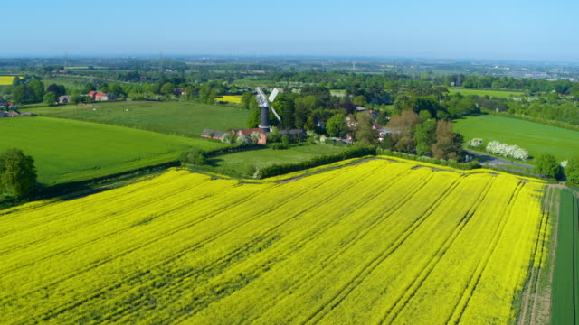 old black windmill & rapeseed oil field, skidby, east riding of yorkshire - rapeseed oil stock videos and b-roll footage