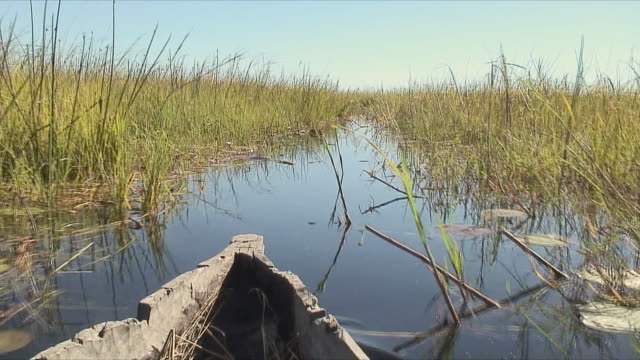 ws pov old boat cutting through wetland / okavango delta, botswana - canoe stock videos & royalty-free footage