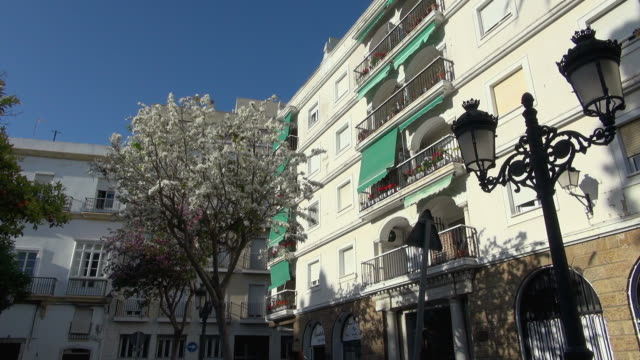 old building and tree with white flowers in cadiz - campo totale video stock e b–roll