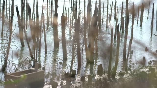 vídeos y material grabado en eventos de stock de antiguo cementerio alrededor del lago - seco