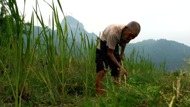 old chinese farmer standing against rice field - povertà video stock e b–roll