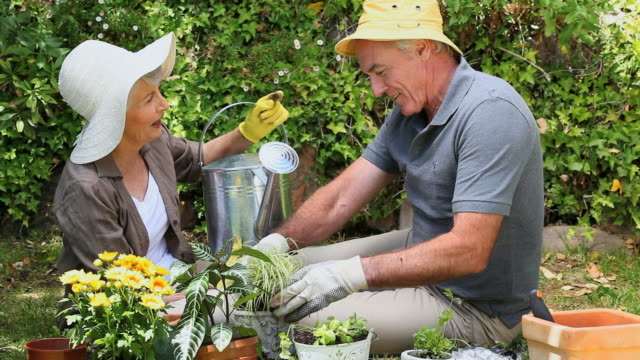 MS Old couple gardening together in garden / Cape Town, Western Cape, South Africa