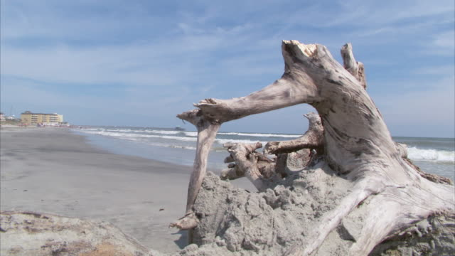 MS Old driftwood tree trunk on beach shore in front of ocean waves / Columbia, South Carolina, United States