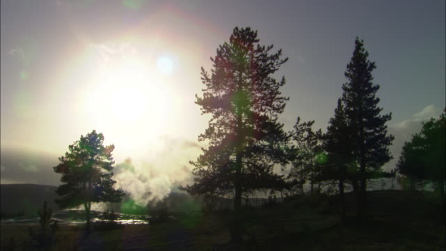 old faithful geyser - steaming in evening light behind silhouetted trees, yellowstone national park available in hd. - old faithful stock videos & royalty-free footage