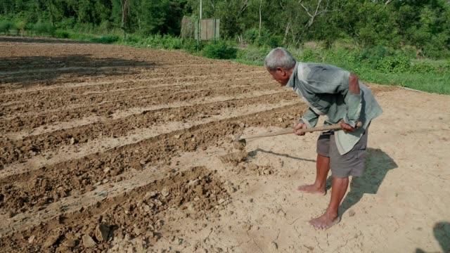 old farmer - jäthacke stock-videos und b-roll-filmmaterial