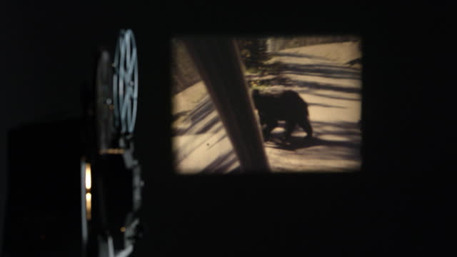 old film of bear in yellowstone projected onto wall - projection equipment stock videos & royalty-free footage