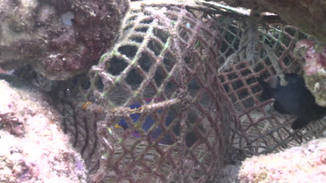old fishing net, southern visayas, philippines - netting stock videos and b-roll footage