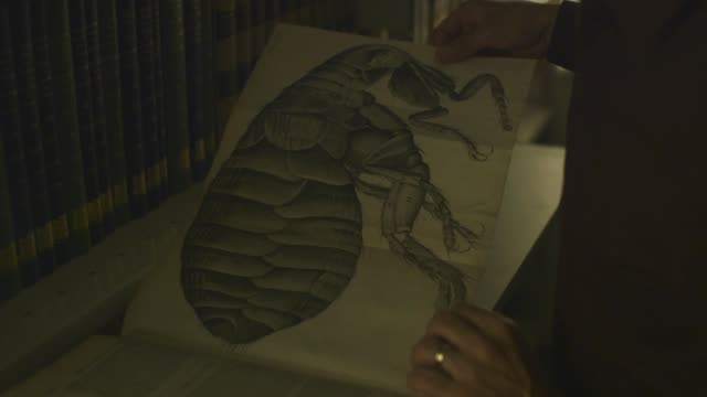old illustrations in robert hooke's 'micrographia' - e book stock videos & royalty-free footage