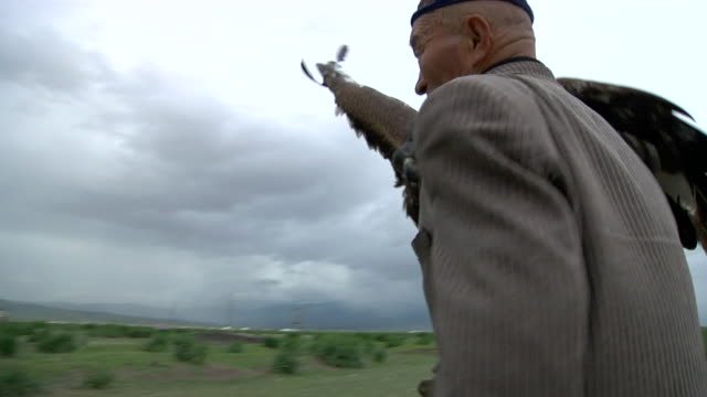 old kazakh man carrying golden eagle on his arm - kazakhstan stock videos and b-roll footage