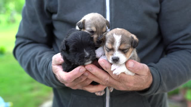 old man standing and carrying three little puppies in hands - three animals stock videos & royalty-free footage