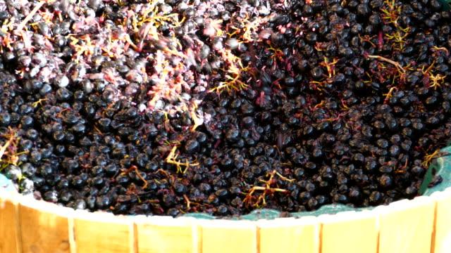 vídeos y material grabado en eventos de stock de antiguo método de producción de vino - aplastado