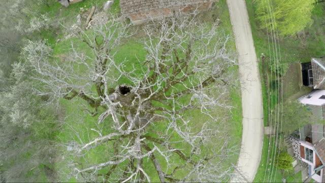 古いオークや美しい風景 - 高い点の映像素材/bロール