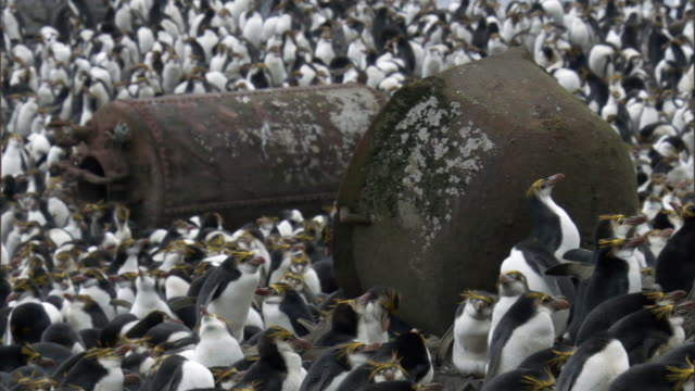 old oil industry equipment amongst royal penguin (eudyptes schlegeli) colony, macquerie island, australia - storage tank stock videos and b-roll footage