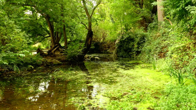 old park pond - copse stock videos and b-roll footage