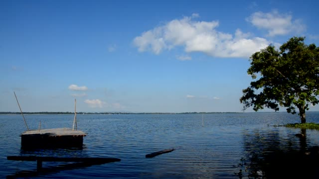 vídeos de stock, filmes e b-roll de jangada e árvore no lago - lago reflection