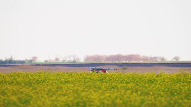vídeos de stock, filmes e b-roll de old red car driving on rural road through a yellow blooming canola field - ucrânia