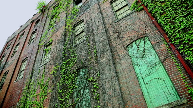 Old run down building with crawling plants