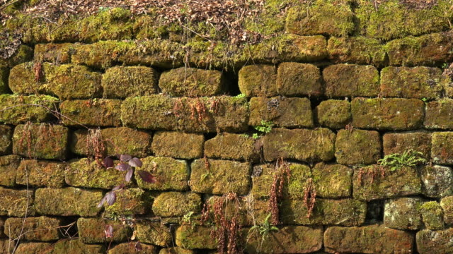 old sanstone wall with moss - differential focus点の映像素材/bロール