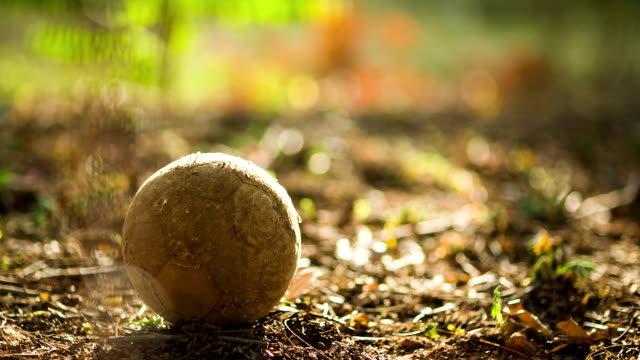 old soccer ball - animal skin stock videos & royalty-free footage