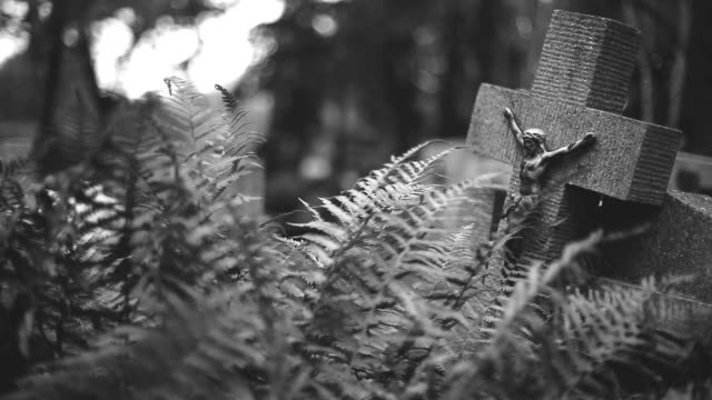 old stone cross and ferns - tombstone stock videos and b-roll footage