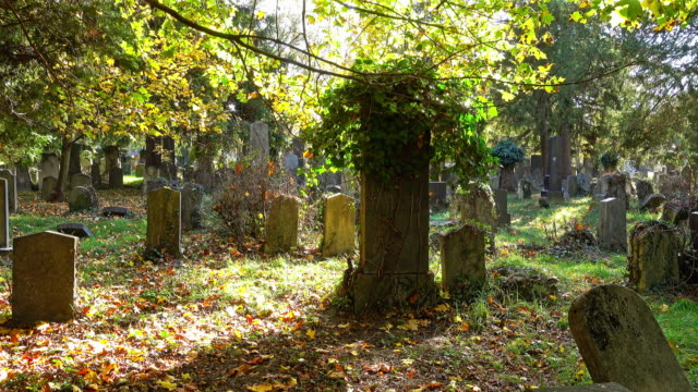 old tombstones in autumn - tomba luogo di sepoltura video stock e b–roll