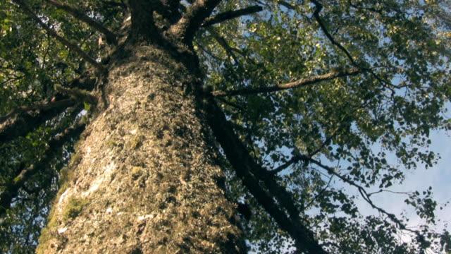 Alter Baum mit CG Partikel