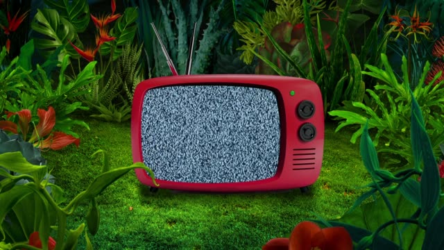 old tv in surreal nature - surreal stock videos & royalty-free footage