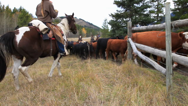 old west cattle roundup - rancher stock videos & royalty-free footage