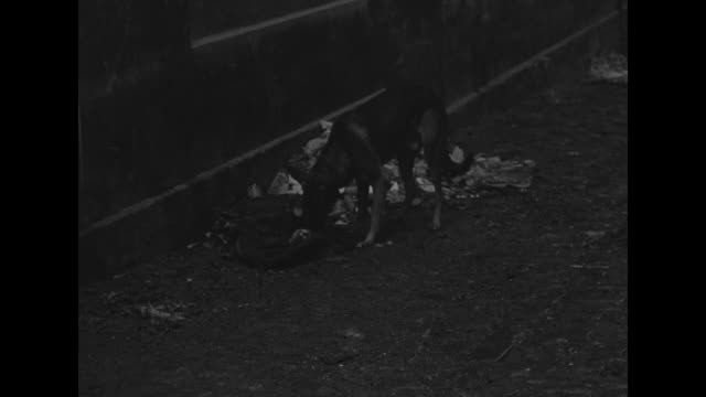 vídeos de stock e filmes b-roll de old woman and boy rummaging through clothes as a dog eats garbage / man leads laden mule and numerous people wrapped in blankets / note: exact day... - esfomeado