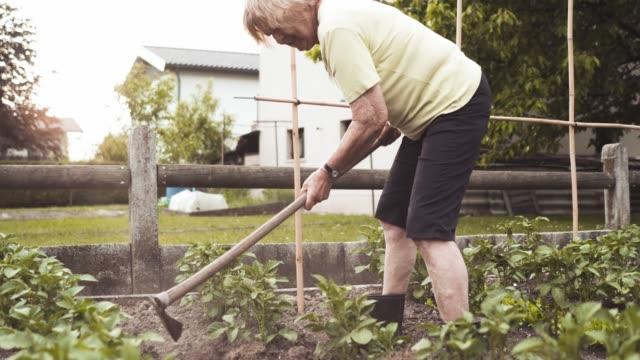 vídeos de stock, filmes e b-roll de mulher velha fazendo o trabalho do jardim (jardinagem) - processo vegetal