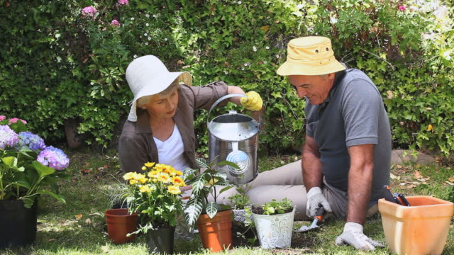 MS Old Woman gardening with husband in garden / Cape Town, Western Cape, South Africa