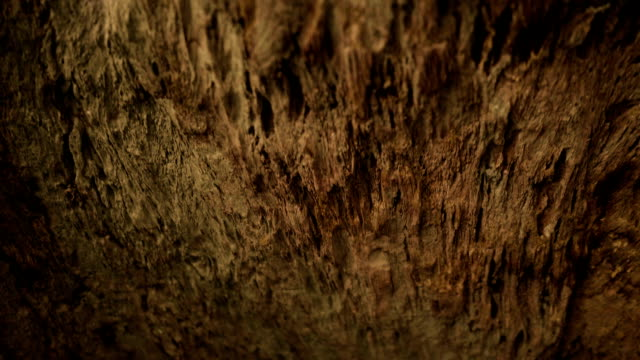 old wood textured - natural pattern stock videos & royalty-free footage