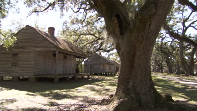 Old wooden slave quarters rest on a tree lined avenue at the Evergreen Plantation. Available in HD