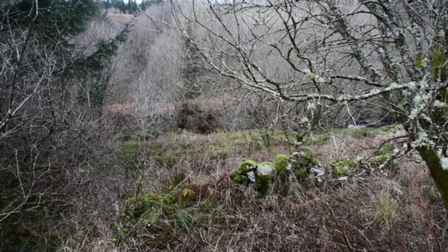 old woodland in ayrshire. - david johnson stock videos & royalty-free footage