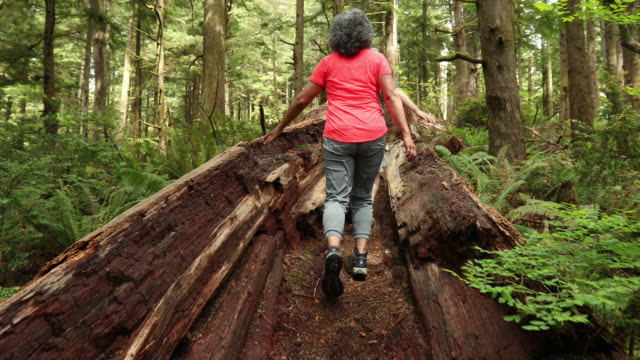 SLO MO Older couple walking through a fallen log
