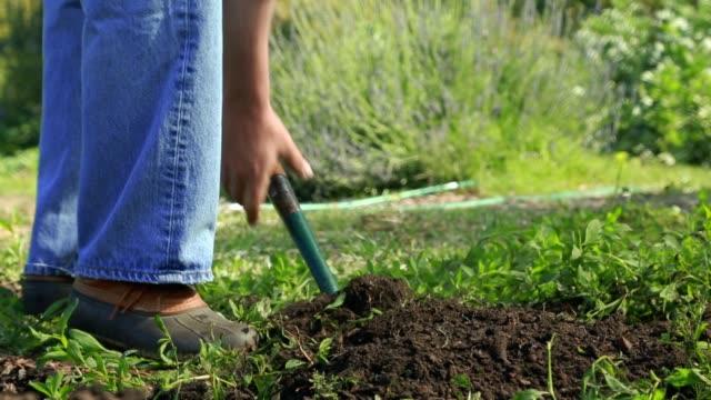 older man working in garden - solo uomini maturi video stock e b–roll