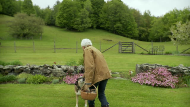 ws pov older woman working in garden / stowe, vermont, usa - gartengerät stock-videos und b-roll-filmmaterial