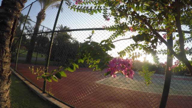 oleander blooms near tennis court - byakkaya stock videos and b-roll footage