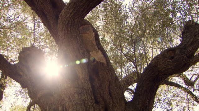 gv olive farm in greece - griechenland stock-videos und b-roll-filmmaterial