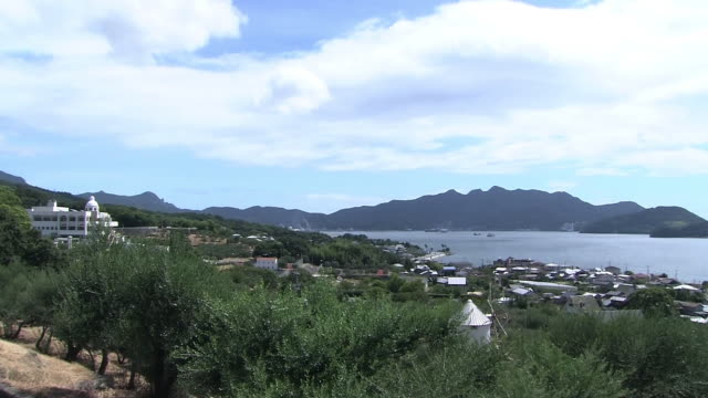 olive farm in shodoshima island, kagawa, japan - tilt down stock videos & royalty-free footage