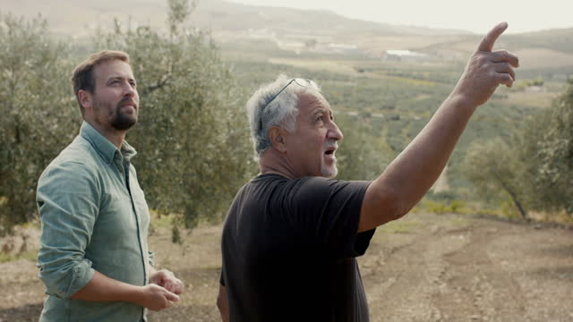 olive farmer and son looking at trees on olive farm - orchard stock videos & royalty-free footage