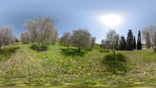 360 vr / olive grove - 360 video stock videos & royalty-free footage