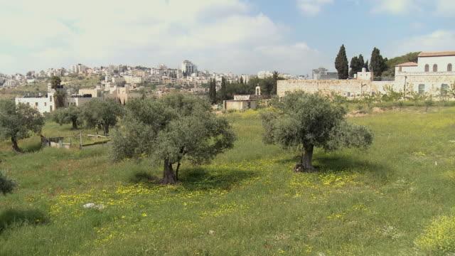 ws pan ha olive grove with buildings on hills in background / al-izzariya, west bank, israel - palestinian territories stock videos & royalty-free footage