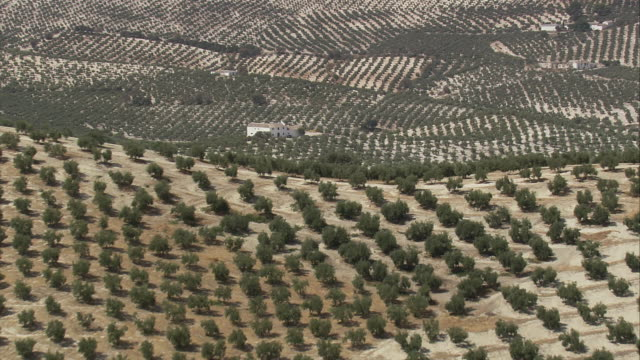 ws pov aerial olive groves at countryside / espejo, andalusia, spain - espejo stock videos and b-roll footage