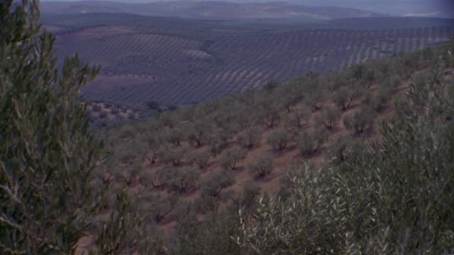 ws, ha, olive groves, cordoba, andalucia, spain - andalucia stock videos & royalty-free footage