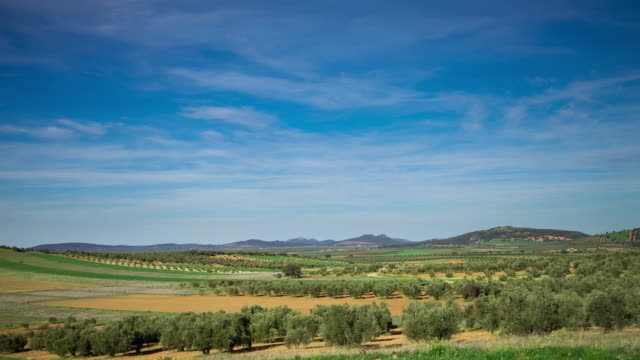olive groves in la mancha - time lapse - grove stock videos & royalty-free footage